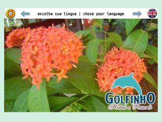 Thumbnail do site Hotel Golfinho